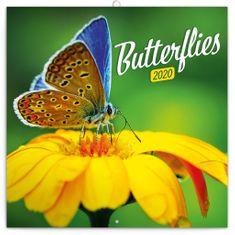 Poznámkový kalendár Motýle 2020, 30 x 30 cm