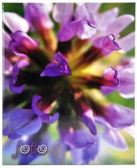 Tradag Album deep purple 200 foto