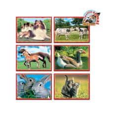 Dohany Skladacie obrázkové kocky 12 ks domáce zvieratká Zelená