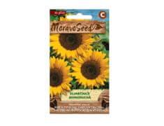 MORAVOSEED Slunečnice roční jednoduchá žlutá