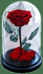 Notta & Belle Věčna růže ve skle «Kráska a Zvíře» - 27cm