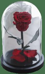 Notta & Belle Růže ve skle - 20cm