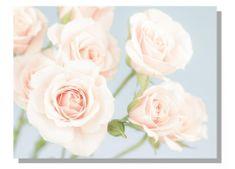 Dimex Obrazy na plátne - Ruže 100 x 75 cm