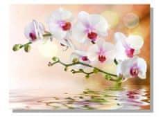 Dimex Obrazy na plátne - Biela orchidea 100 x 75 cm
