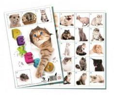Bonaparte Pexeso Kočky společenská hra 32 obrázkových dvojic