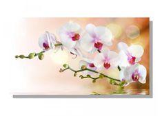 Dimex Obrazy na plátne Dimex - Biela orchidea 90 x 50 cm