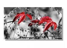 Dimex Obrazy na plátne Dimex - Červené listy v šedom 90 x 50 cm