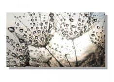Dimex Obrazy na plátne Dimex - Púpava s rosou 90 x 50 cm