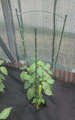 Max Kruhová podpera rastlín 90cm 4 kruhy