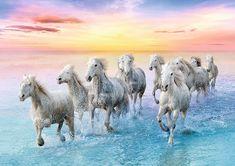 Trefl Galloping White Horses