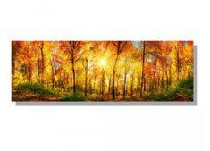 Dimex Obrazy na plátne - Slnečný les 150 x 50 cm