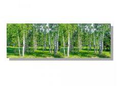 Dimex Obrazy na plátne - Brezový les 150 x 50 cm