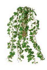 EverGreen Minilístková rostlina Břečťan, 70 cm