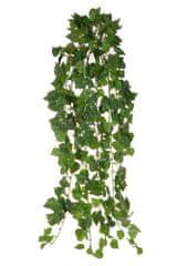 EverGreen Minilístkovárastlina Cissus, 70 cm