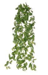 EverGreen Minilístková rastlina tradescantia, 70 cm