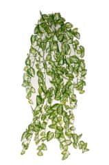 EverGreen Minilístková rastlina Syngonium, 70 cm