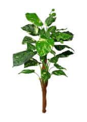 EverGreen Pothos 90 cm, kmeň s kokosovým vláknom