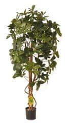 EverGreen Schefflera EXCLUSIVE 110 cm