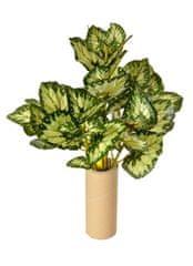 EverGreen Begonia, 5 výhonkov, 50 cm