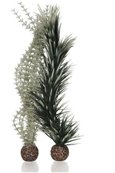 Oase Dekorativní rostliny Ambulia šedá a zelená velké