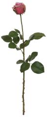 Shishi Ciemna róża 66 cm