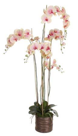 Shishi Rožnato rumena orhideja s cvetličnim lončkom 150 x 75 cm