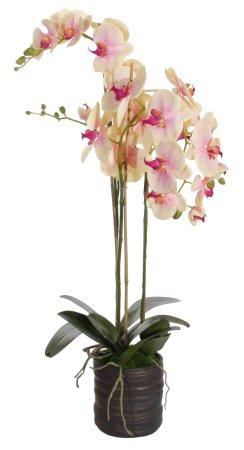 Shishi Rózsaszín-sárga orchidea virágcseréptel 90 x 40 cm