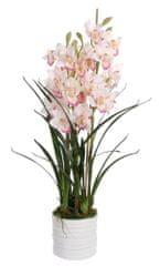 Shishi Člunatec v kvetináči 100 x 40 cm ružový