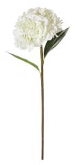 Shishi Biela hortenzie 90 cm