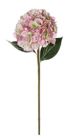 Shishi Roza hortenzija 90 cm