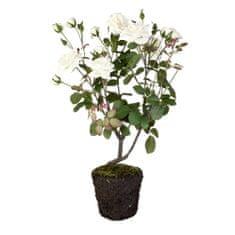 Lene Bjerre Ozdobny krzew róży, wysokość 85 cm