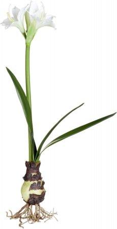 Lene Bjerre Dekoratív AMARYLIS fehér, magassága 60 cm