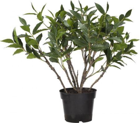 Lene Bjerre Lovorjev grm v loncu FLORA, zelen