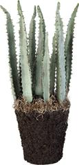 Lene Bjerre Kaktusz FLORA