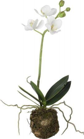 Lene Bjerre Srednja orhideja s koreninsko grudo FLORA, bela