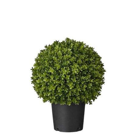 Lene Bjerre Kicsi bukszifa FLORA, zöld, magassága 47 cm