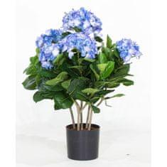 A La Maison Modrá hortenzia v obale, 53 cm