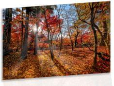InSmile Obraz na plátně - podzim Velikost: 150x100 cm