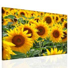 InSmile Obraz na stěnu - slunečnice Velikost: 120x80 cm