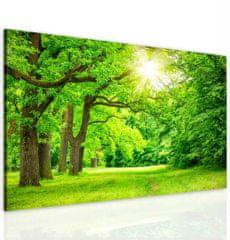 InSmile Obraz lesní mýtinka Velikost: 120x80 cm