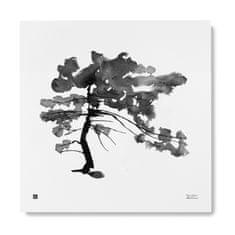 Teemu Järvi Plakát Pine Tree 50x50