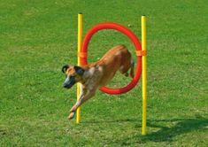 Karlie przeszkoda dla psa - obręcz, żółta/czerwona