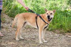 Karlie szelki bezpieczeństwa samochodowe dla psa S/M 38-60 cm x 25 cm