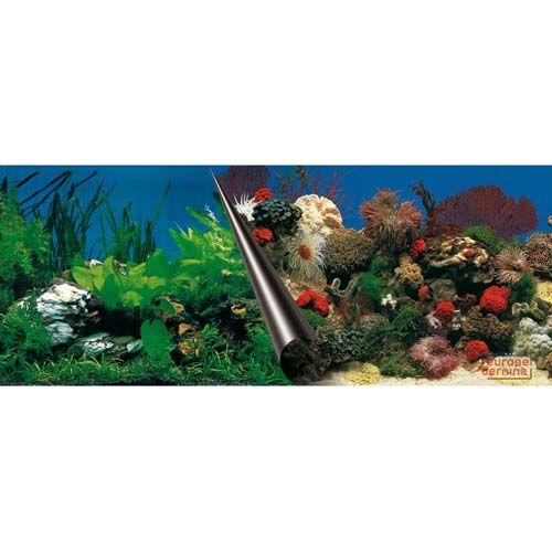 EBI Photo Decor Stone + Coral 80 x 40cm