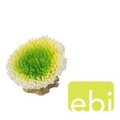 EBI AQUA DELLA CORAL ACROPORA EFFLORESCENS LIME/ca. 10,5x9x8cm
