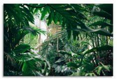 Dalenor Obraz Domácí džungle, 75x50 cm