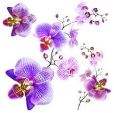 AG design SS3859 Samolepicí dekorace Orchidej, 30 x 30 cm