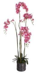 Shishi Fialová orchidea s kvetináčom 150 x 75 cm