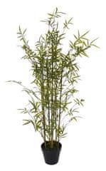 Shishi Bambus v obale na kvetináč 145 cm
