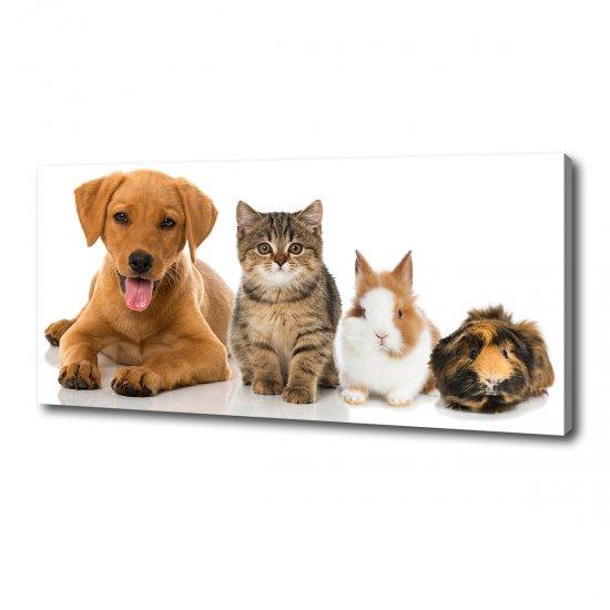 Foto obraz na plátně do obýváku Pes a kočka